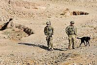 (Lance Corporal Jonathan Hall , Sapper Robert Muraru and Explosive Detection Dog Shuba from the 2nd Cavalry Regiment Task Force during the Theatre Assistance Force handover patrol with Security Force Two near Multi National Base - Tarin Kot.
